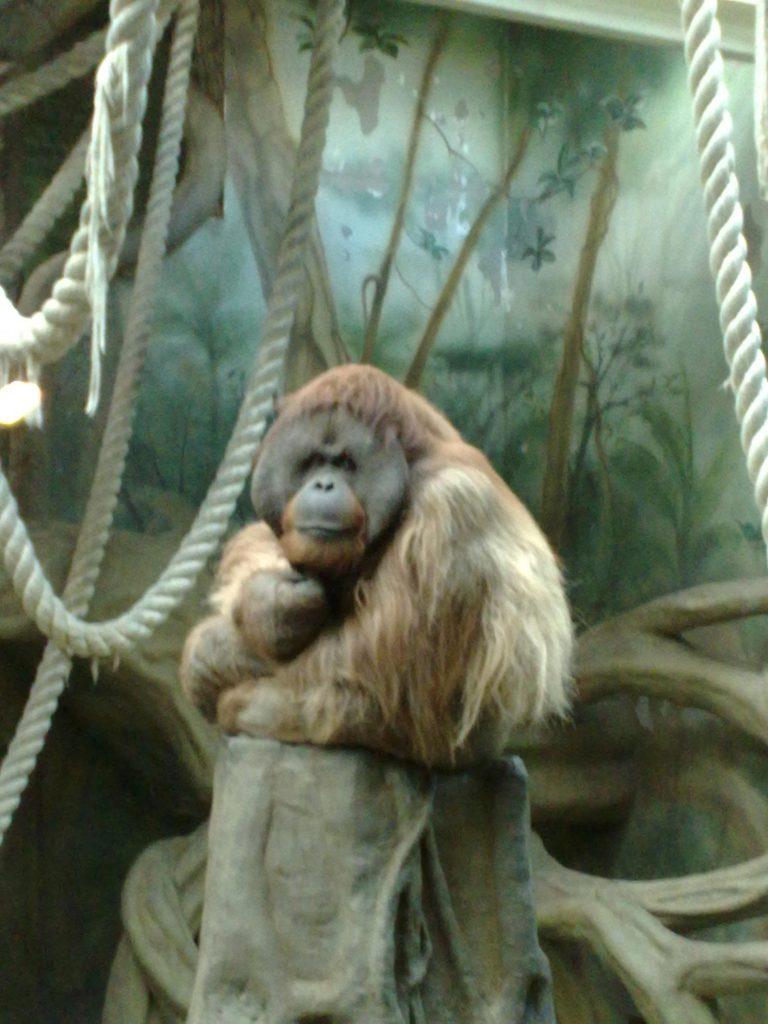 в зоопарк с малышом