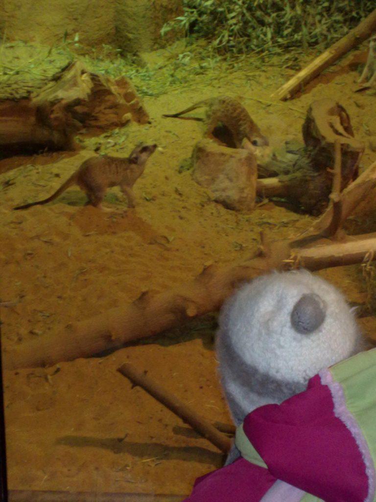 Наш первый поход в зоопарк