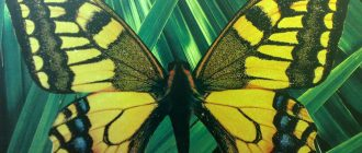 дом бабочек