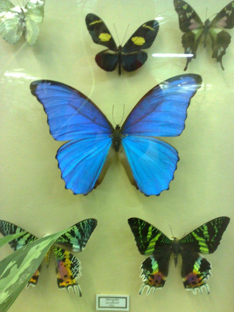 дом бабочек в екатеринбурге