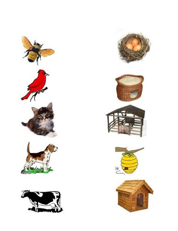 где живут разные животные