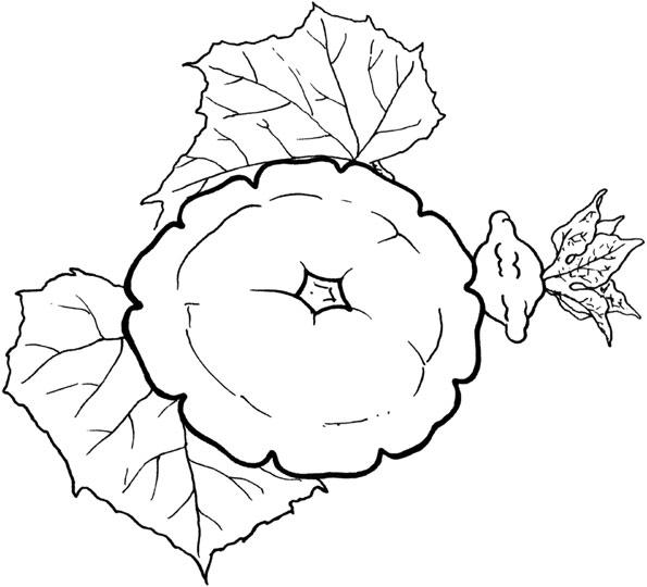 овощи раскраска для детей