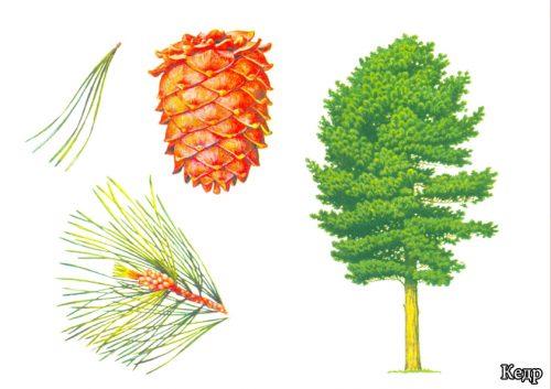 Из чего состоит дерево и его веточки?