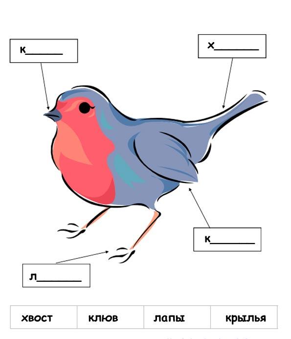 части тела птицы картинки