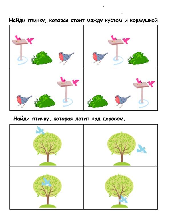 птицы картинки для детского сада
