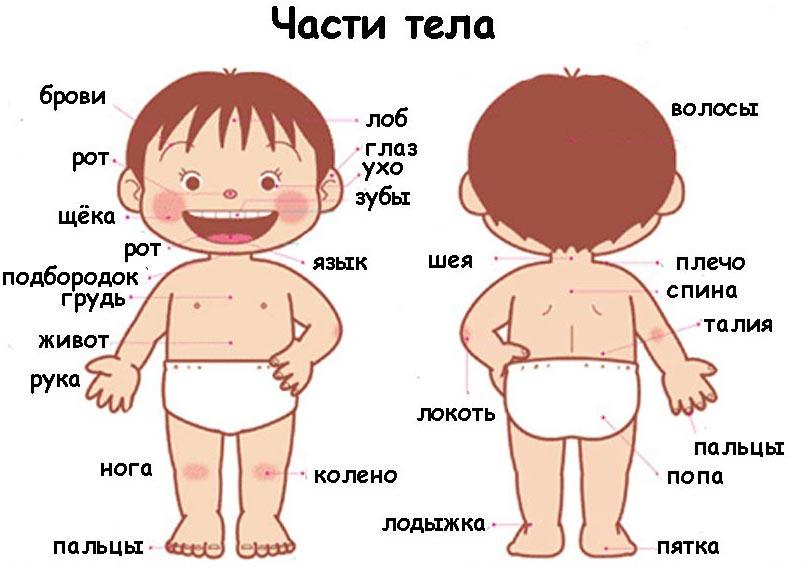 знакомства ребенка с частями тела