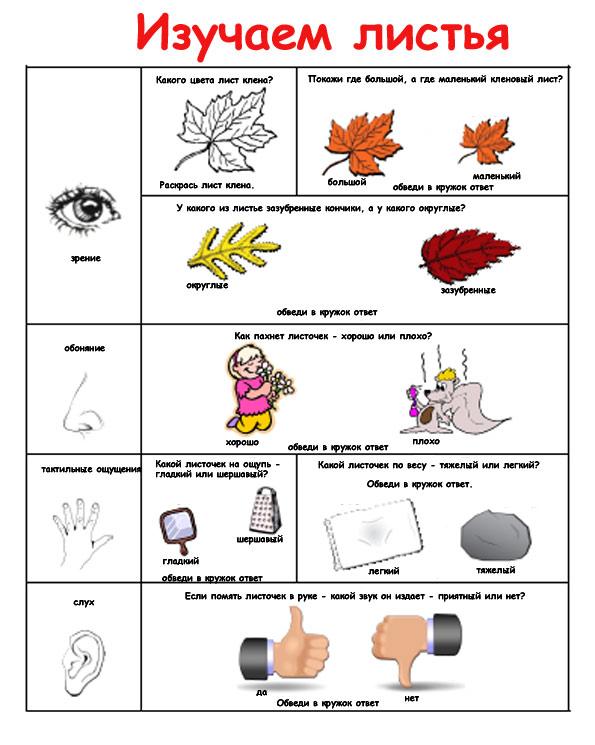 листья картинки задания для детей