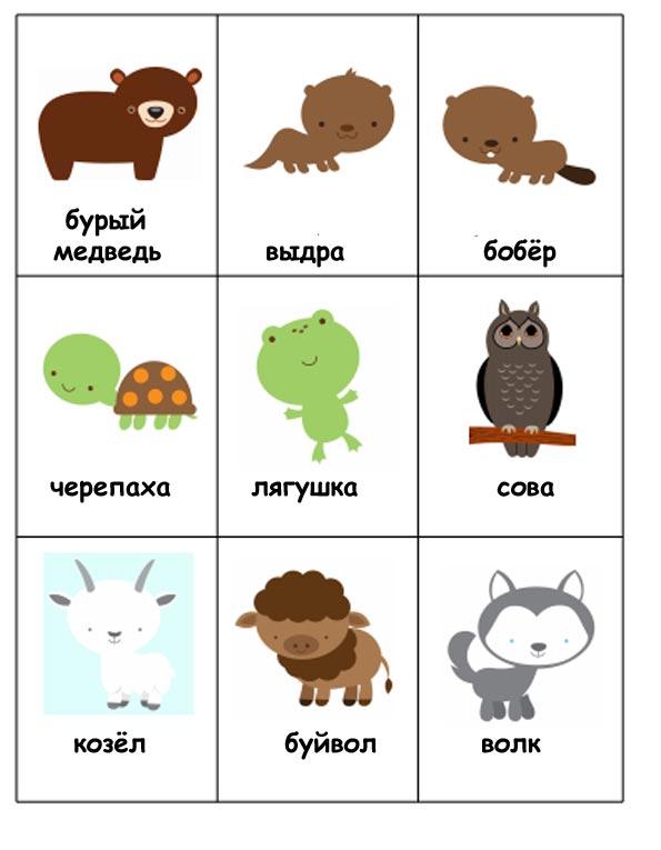 картинки животных зоопарка