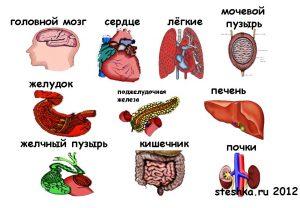 Картинки с частями тела человека