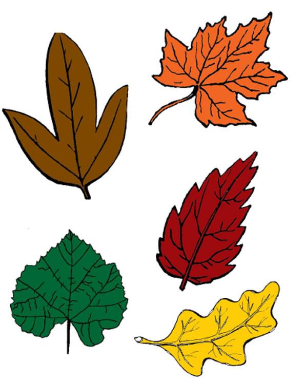 листья и осень картинки для детей