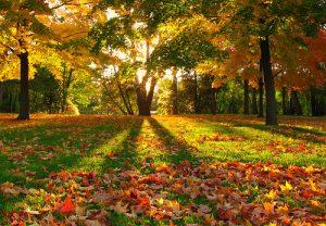 autumn11 300x208 Осень картинки для детей