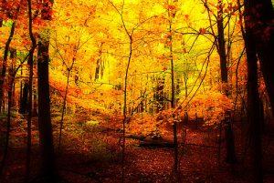 autumn3 300x201 Осень картинки для детей