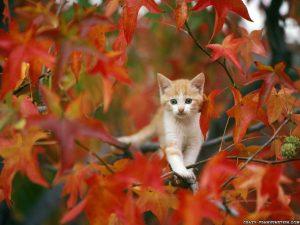 cat in autumn wallpaper 300x225 Осень картинки для детей