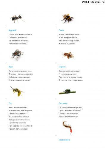 стихи для детей про насекомых