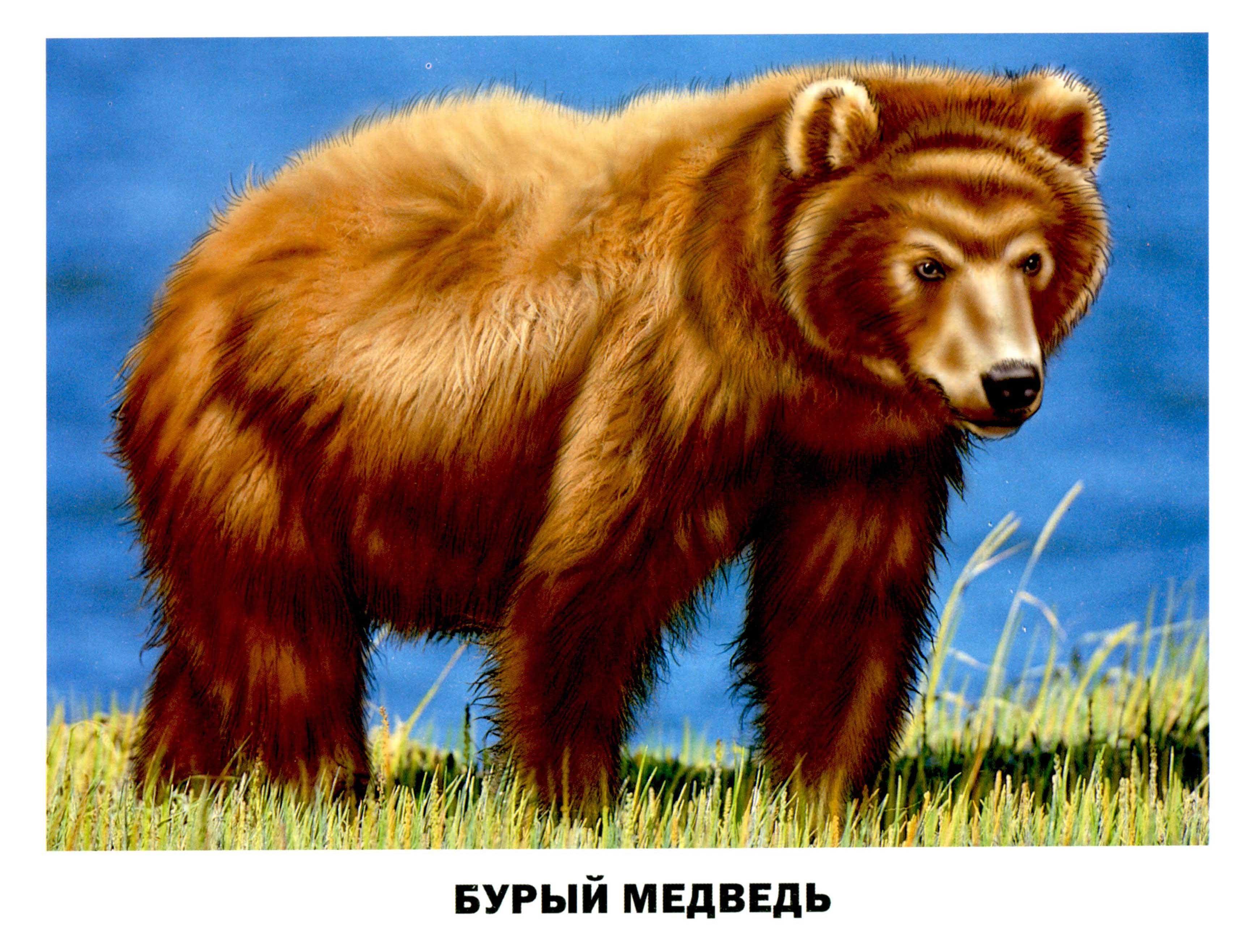 Картинки домашних животных  Картинки Detkitoday