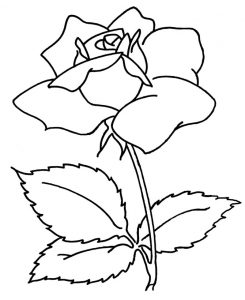 Картинки-раскраски цветы: роза, ромашка и другие