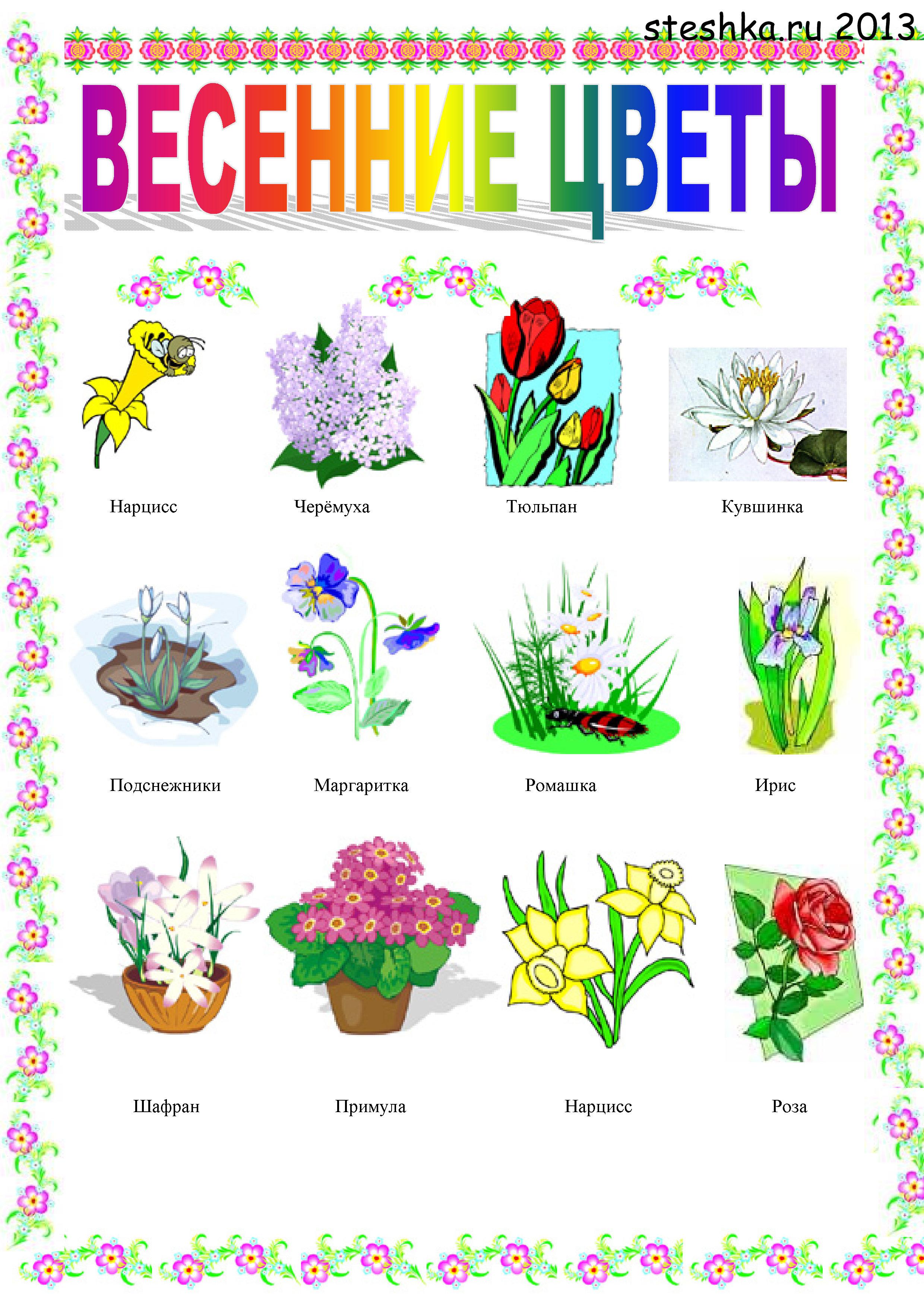 Картинка для детей полевые цветы
