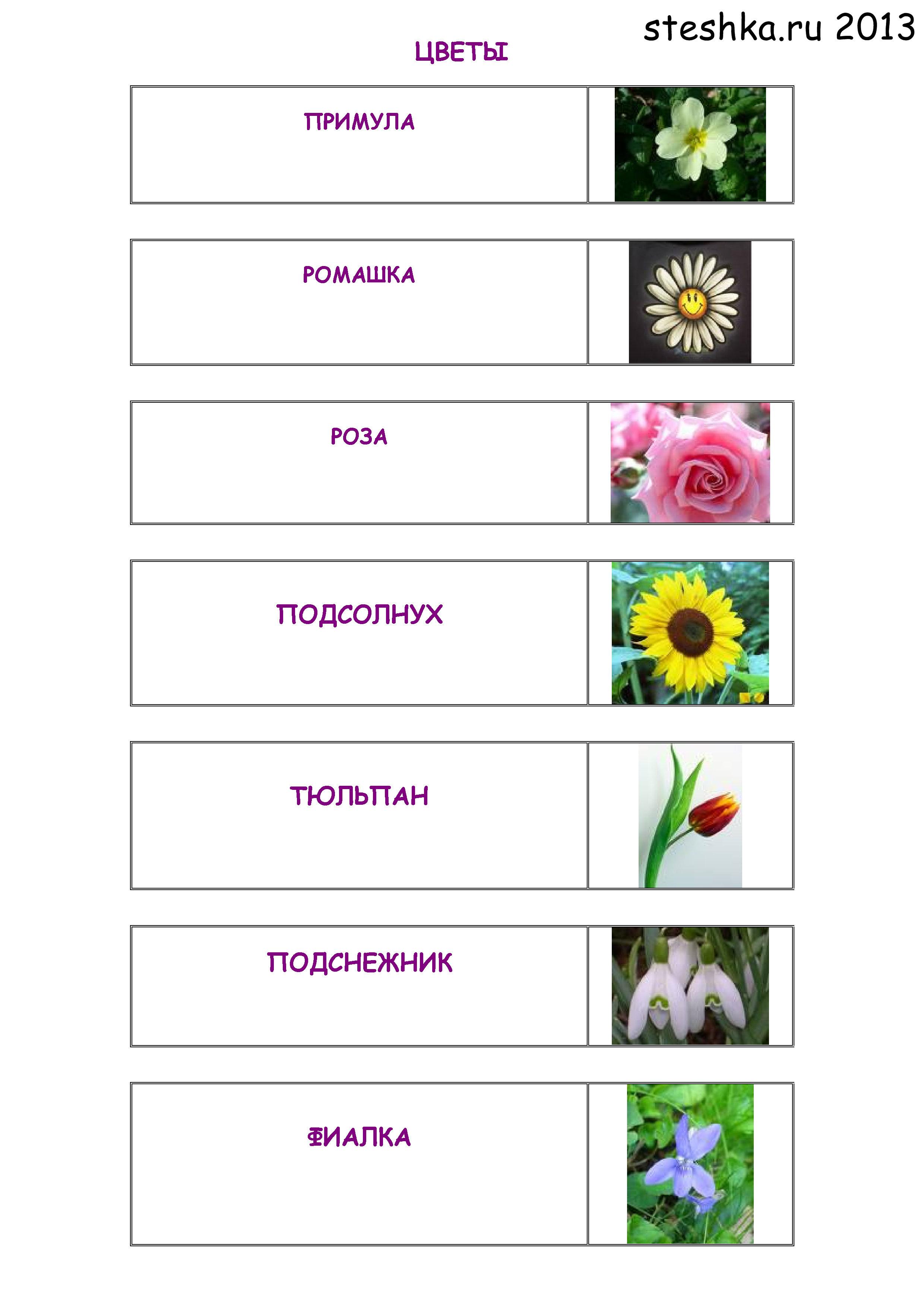 Название цветов на е