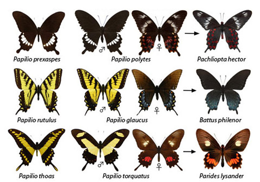 бабочки картинки