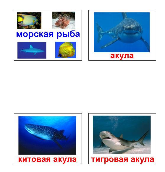 морские рыбы картинки