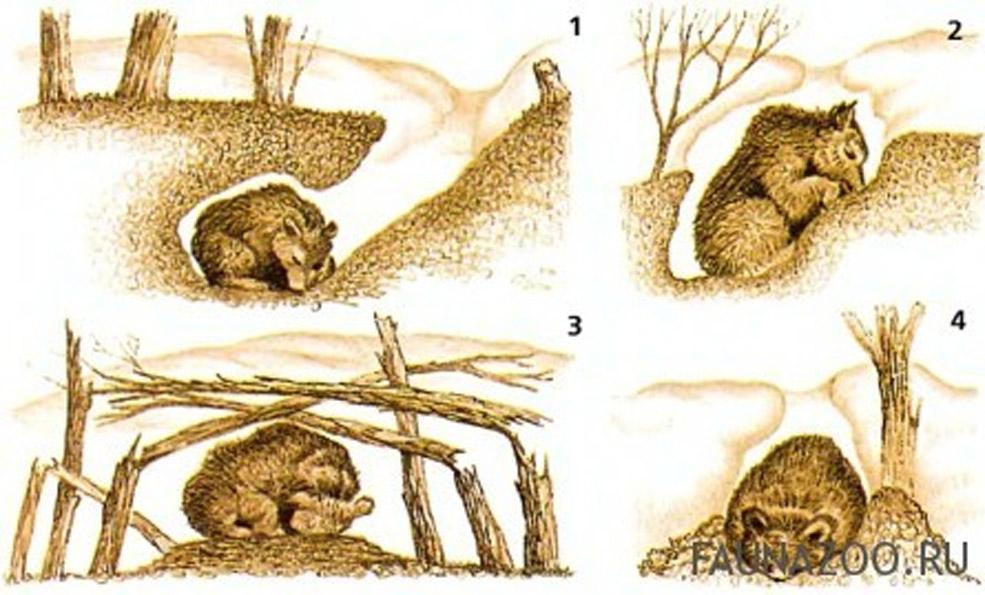 спячка животных зимой