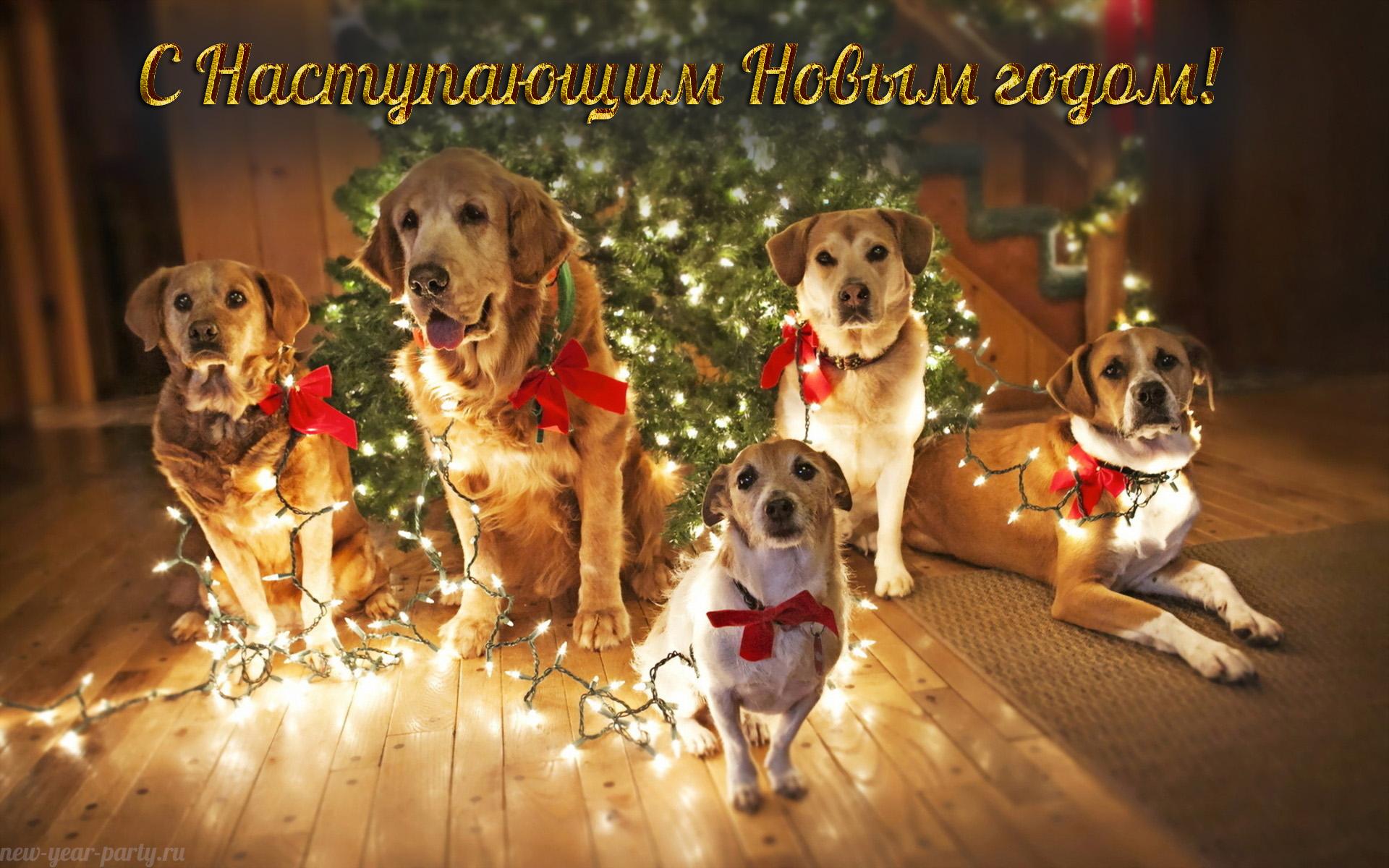 новогодняя открытка 2018 год собаки8