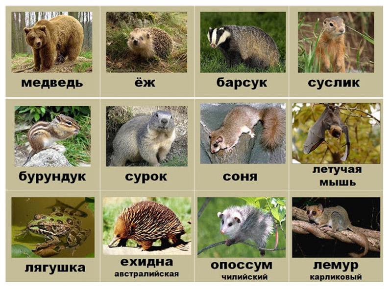 спячка животных