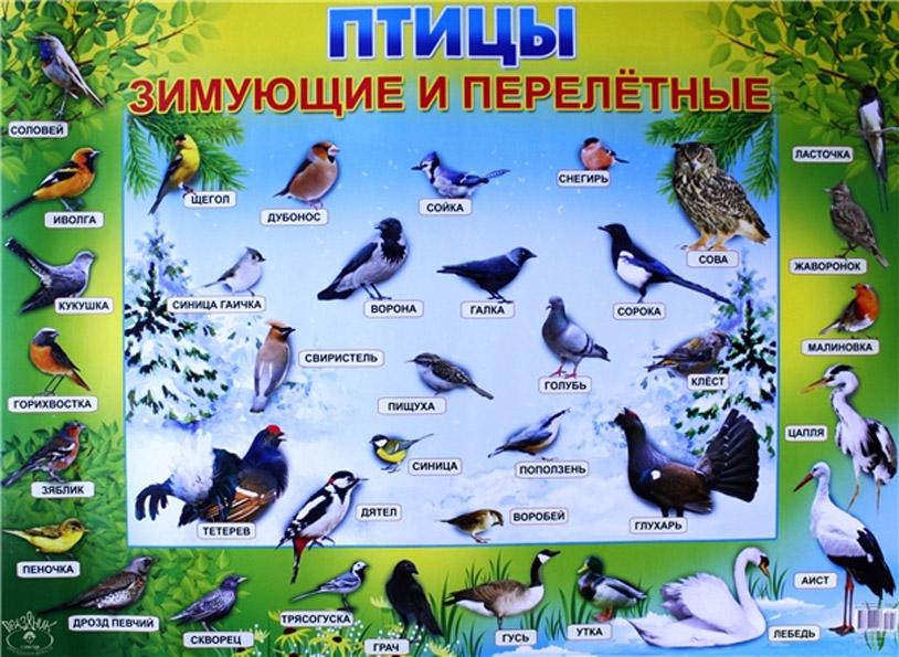 перелетных птиц для детей