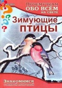 Какие птицы остаются зимовать, а какие улетают на юг?