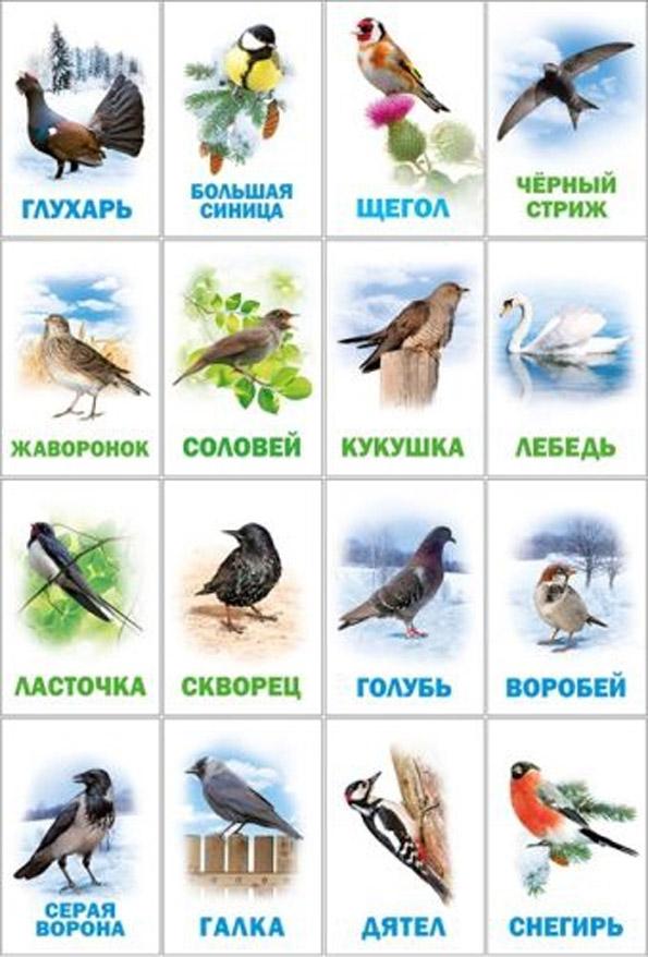 Картинки птицы зимой для детей все птицы