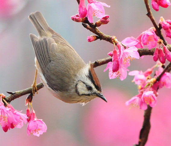 весна картинка