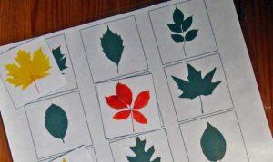 листья деревьев