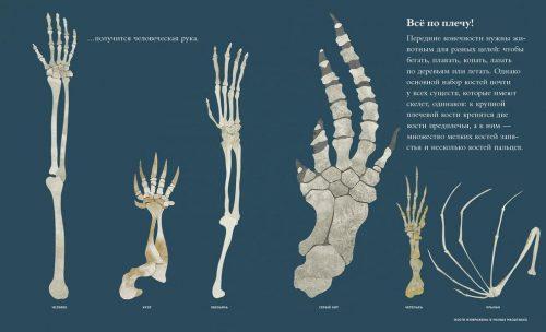 дженкинс скелеты и кости фото