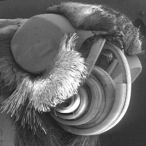 картинки микробов под микроскопом