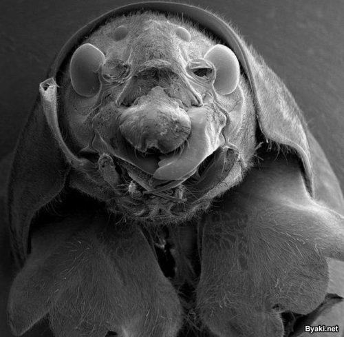 фото микробов для детей