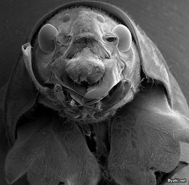naglotalas-rolik-o-mikrobe