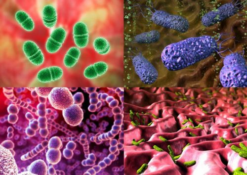 Микробы фото для детей на руках
