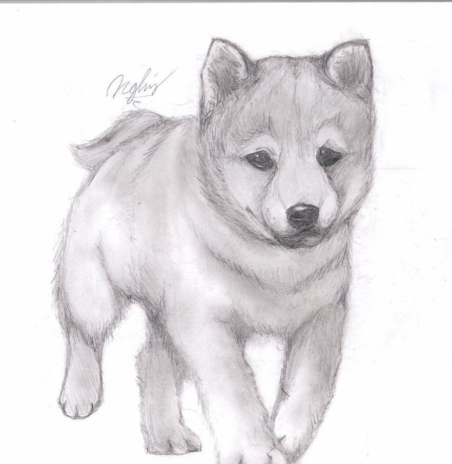 how to draw a realistic puppy easy
