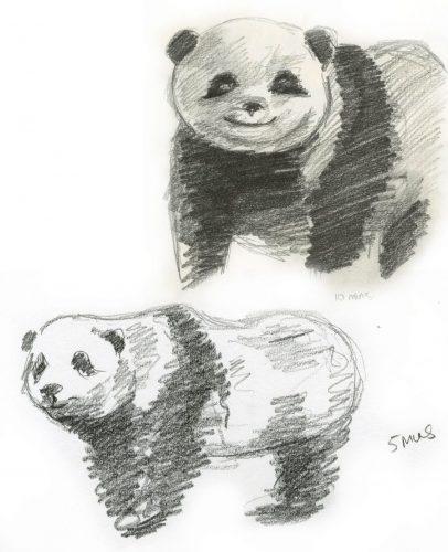 картинки для срисовки животные