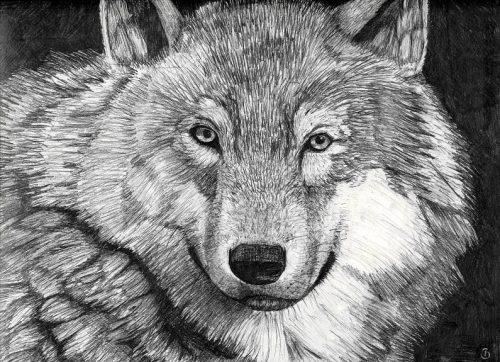 картинки нарисованные карандашом животные