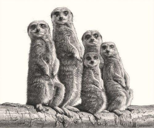 картинки животных карандашом