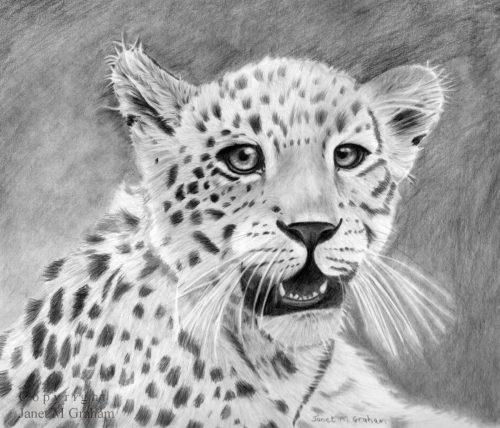 картинки рисунки животных