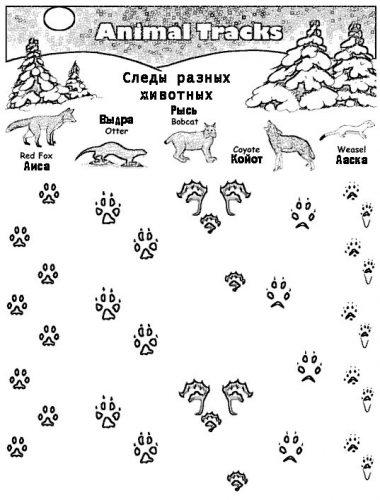 следы животных картинки с подписями