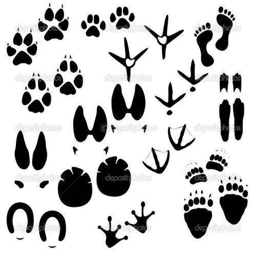 следы диких животных картинки