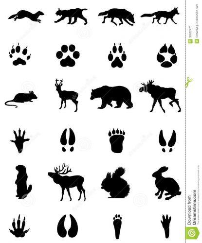 картинки следы животных для детей