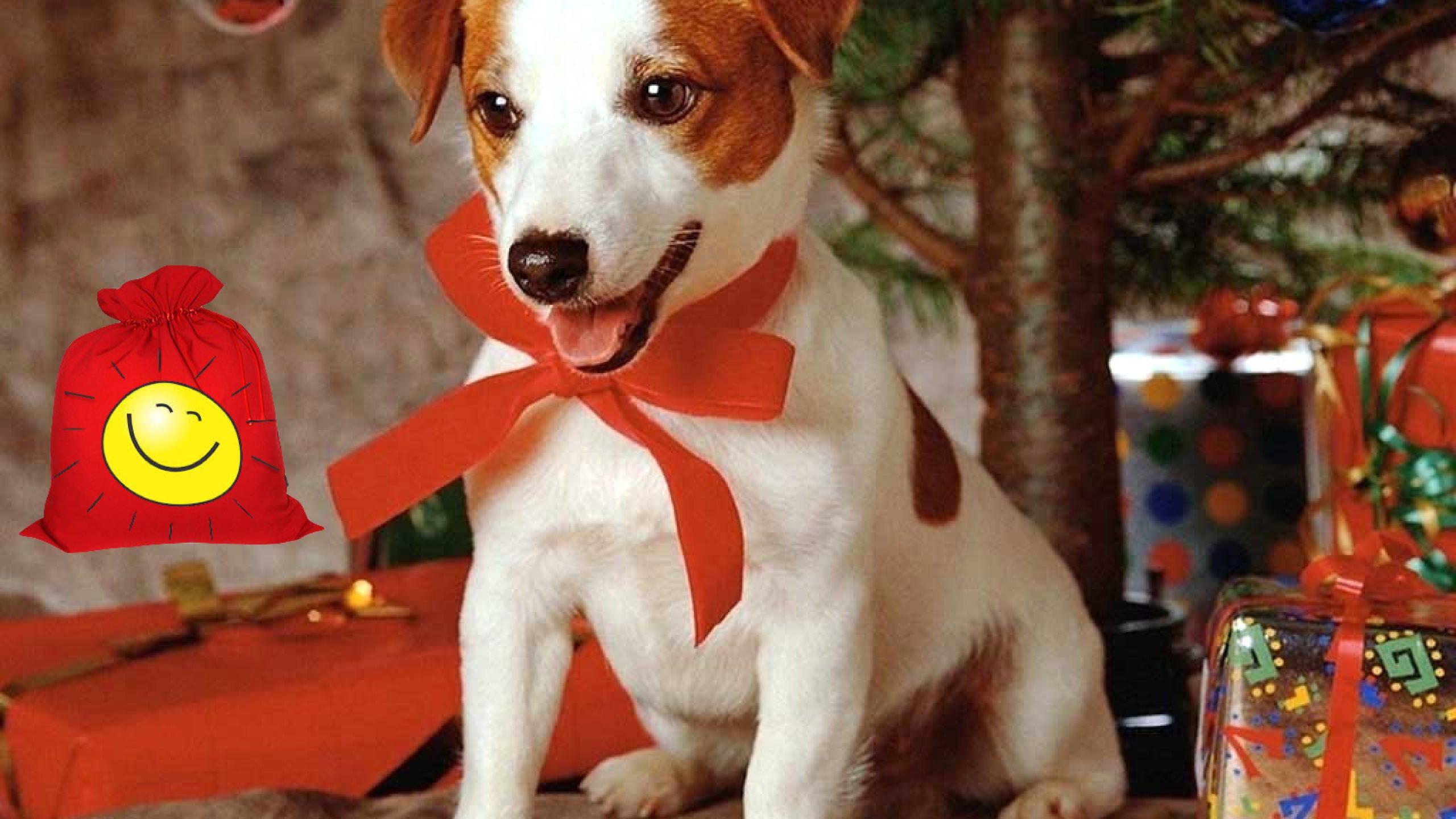 новый год собаки картинка5