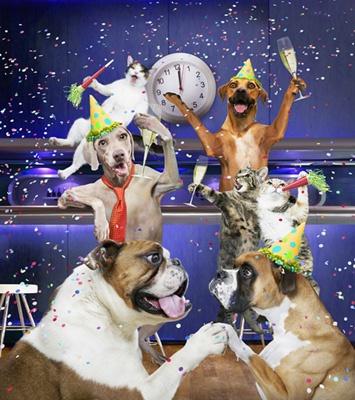 картинки собак на новый год2