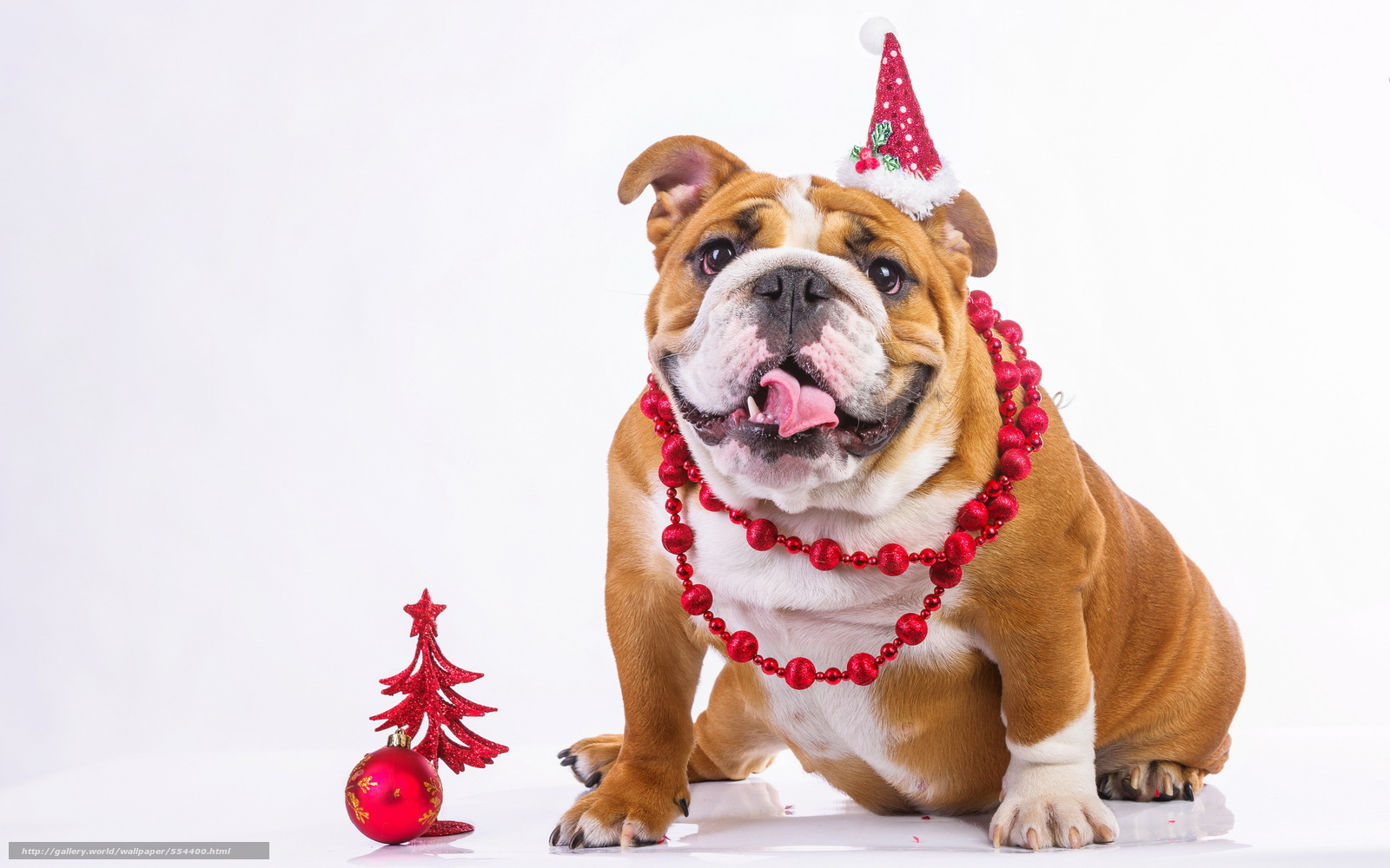 картинки собак на новый год5