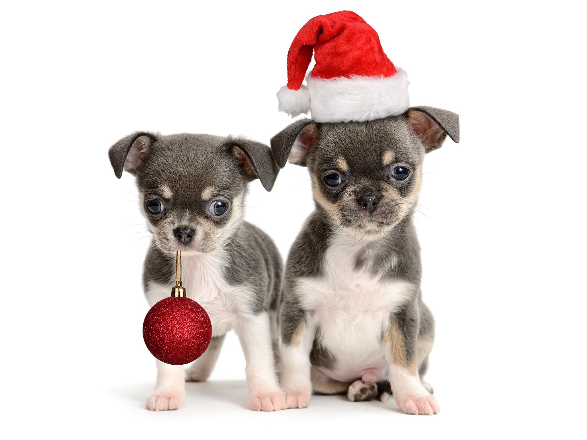 картинки собак на новый год6