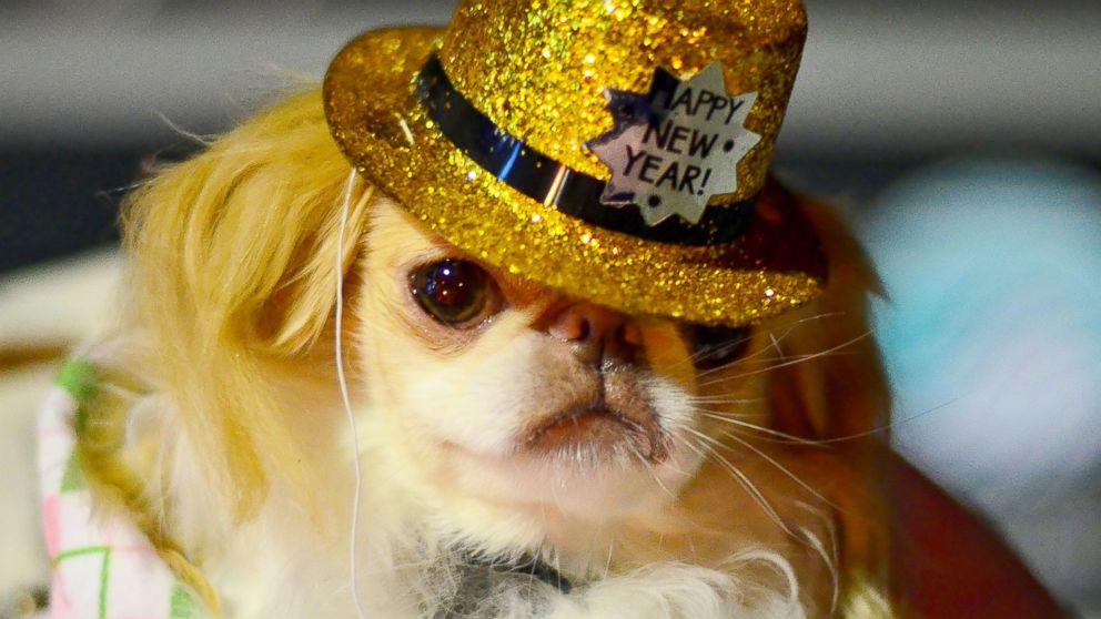 картинки собак на новый год4